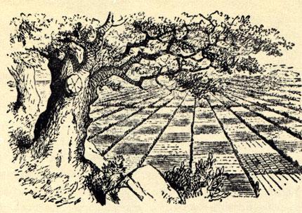 Оригинальные иллюстрации Джона Тэниэла к английскому изданию книги Льюиса Керролла 'Алиса в Зазеркалье'. Шахматный сад, в котором началась странная история Алисы.